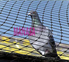 Best Pigeon Nets in Bangalore